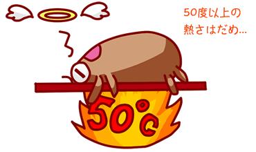 ダニは熱で死ぬが50度以上が必要。